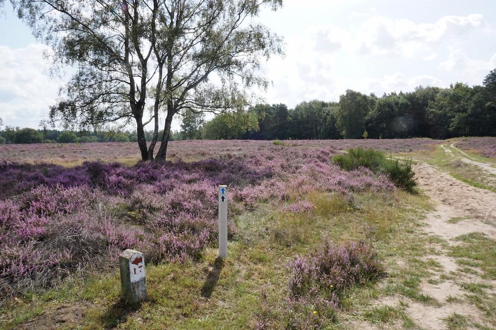 CR Vechtdalhuis Berg en Bos nabije heidevelden